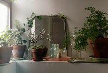 plant vs zombie /  keeping your brain fresh