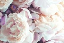 Blooms / by Rebecca Story