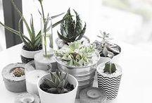 // Plants + Greenery