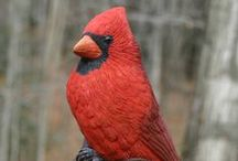 Birds of the Museum / Carvings by Bob Spear,Art Exhibits here at the Museum, and the occasional photo of live birds too
