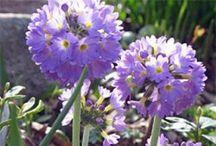 Gardens/ Plants/ Flowers / by Jacqueline W.