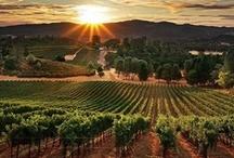 Vineyards & Wineries / Where wine is born...