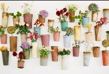 flowers in tins