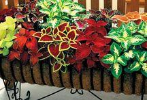 Gardening Ideas / Tammy Rothwell tarafından