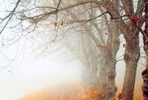 Favorite Time of Year / by Hilary Kanutsu