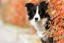 Autumn / by Rhonda Powell