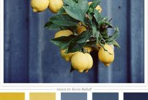 Color Schemes  / by Shannon Edwards