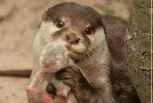 Creatures Comfort / cute little critters -- from all species
