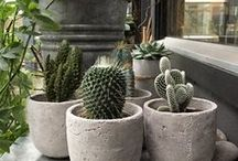 PLANT LADY / all kinds of info on indoor and outdoor gardening