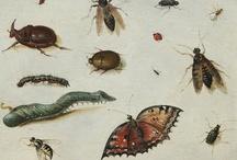 Creatures, faune, bestiaire