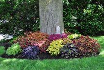 gardens / by Valerie Evans
