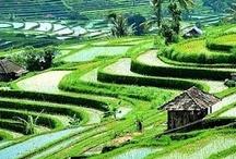 Bali - Indonesië / Indonesia (www.DOE-reizen.nl)