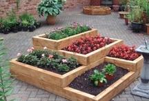 Gardening and Backyard Ideas