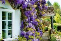 NSLife Home & Garden / Inspiring ideas for indoor and outdoor