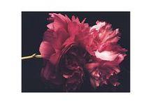 /herbal & floral/