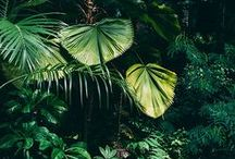 Deep Green Love / Viva la Vegetation!