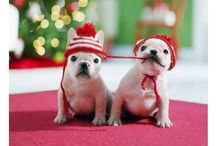 Christmas / by Caitlin Dunn