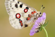Butterfly's in my life