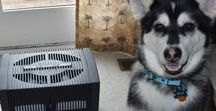 Pets Love Venta! / Pets love the Airwasher just as much as their owners!  Our furry friends are exposed to many of the same indoor air pollutants we are, if not more, considering the fact that pets spend the majority of their time indoors. Because of this constant exposure to polluted indoor air, pets are more susceptible to developing nose and throat ailments, as well as asthma and bronchitis. That's why so many pets are Venta fans!