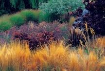 Grass & Bamboo
