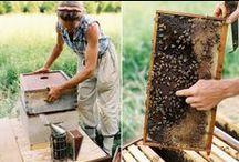 mehiläiskasvattaja