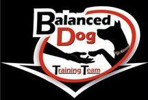Dog Traning
