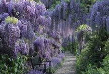 Dream Garden / by Jaimie Freeberg