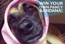 Wondercide Community Photos / Photo contests and user submissions - we love all of our wonderful pet pictures!