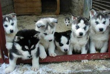 Animal Lover / precious....precious...precious...