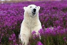 Wild Alaska / by Michele K. Carter RN