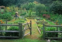 Down On The Farm / Homesteading and Farming Ideas / by Michelle Higgins