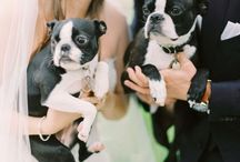 Wedding Dogs and Other Pets! / Why not have your special furry friends involved in your wedding day? These are some adorable ideas! / by Jessika Feltz | Jupiter and Juno