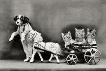 Vintage fun / by Marguerite DelGiudice