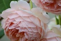 Flowers / by Debra New