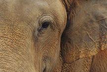 elephant. / by Alanna Davies