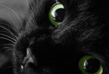 """gatos / """"El más pequeño gato es una obra maestra."""" - Leonardo da Vinci / by Carmen"""