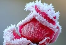 Winter Magic / by Marsha A. Moore