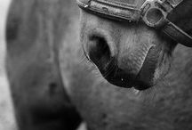 Equus / Gift of Poseidon  / by S Olsen