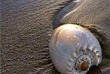 "Life's a beach / by Carole    "" Weezer "" Parker"