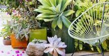 Container Gardens / Beautiful container plantings for your deck, entryway, or yard
