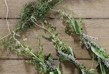 Herbs / All you need to know about herbs, from growing to cooking.