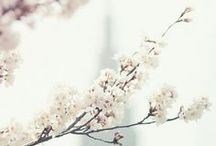 Springtime / by Julie Holstein