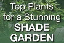 Shade Loving Gardens / Share inspiration for #gardens in shade