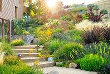 Low-Water Gardening / Plant picks and design ideas for creating a drought-tolerant yard / by Sunset Magazine