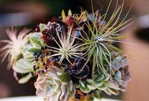 Succulents / Our favorite drought-tolerant plants.