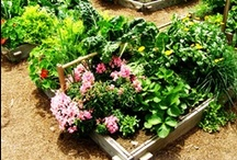 Gardening / Ideas for the garden. / by Jeannine Aristeguieta