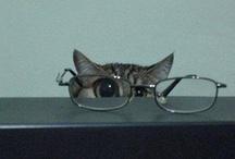 kittenaid / le mew.. le meow.. le purr..