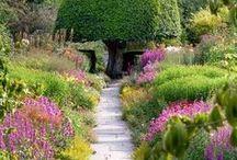 Garden / by mommerw