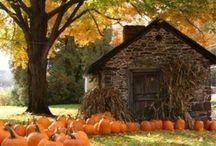 Fall / by Ashley Shoultz