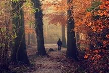 Fall Love / by Martina Paletti